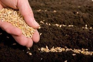 Россия одобрила проект Соглашения об обращении семян в рамках ЕАЭС