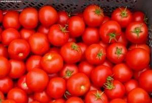 Возобновление поставок турецких томатов в Россию