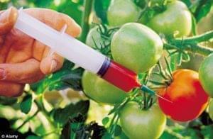 Новые правила маркировки «ГМО»